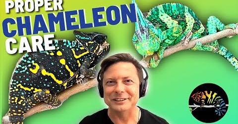 Veiled Chameleons and Bill