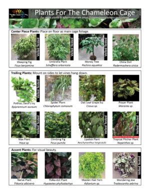 Chameleon Plants 061321