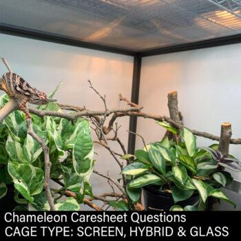Chameleon in Hybrid cage