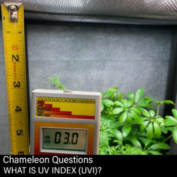 Chameleon UVB Measuring with Solarmeter 6.5