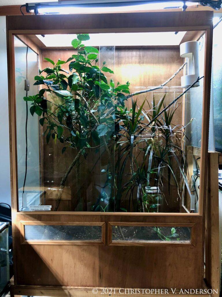 glass chameleon cages