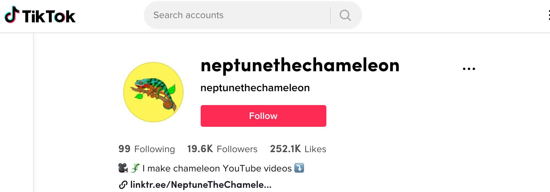 Neptune the chameleon on tiktok